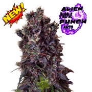 Alien Purple Punch auto