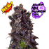 Alien Purple Punch auto