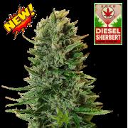 Diesel Sherbert auto