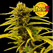 Lemon Z fem