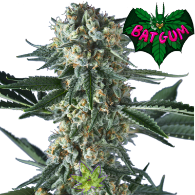 Bat-Gum fem