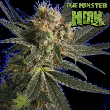 Blue Monster Holk fem