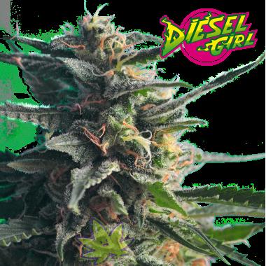 Diesel Girl fem