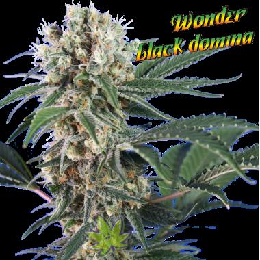 Wonder Black Domina fem